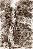 Drawing: Waterfall, Hamner Springs, New Zealand