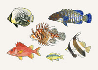 Cook Islands Fishes, Print 90
